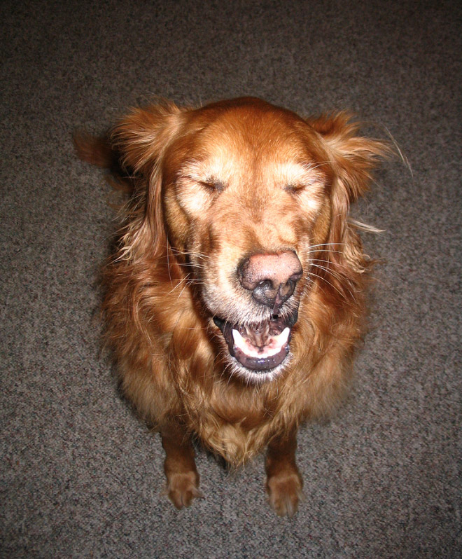This Is So Damn Funny! Dogs' Faces Could Be So Hilarious When They Got Caught Mid-sneeze