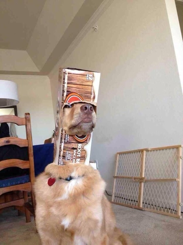 Dog who is also a root beer astronaut.