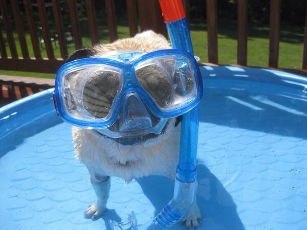 23 Cutest Pets You've Never Seen! OMG, I'm Dying Now
