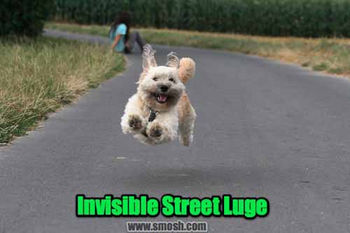 37 Animals With Invisible Stuff