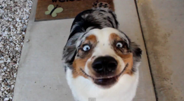 29 Dogs Who Just Want To Have A Talk With This World
