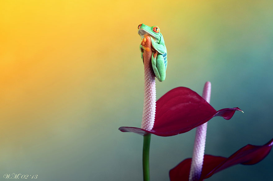 Photograph Friend... by Wil Mijer on 500px