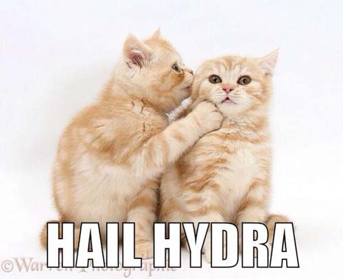 hail hydra meme cute kittens