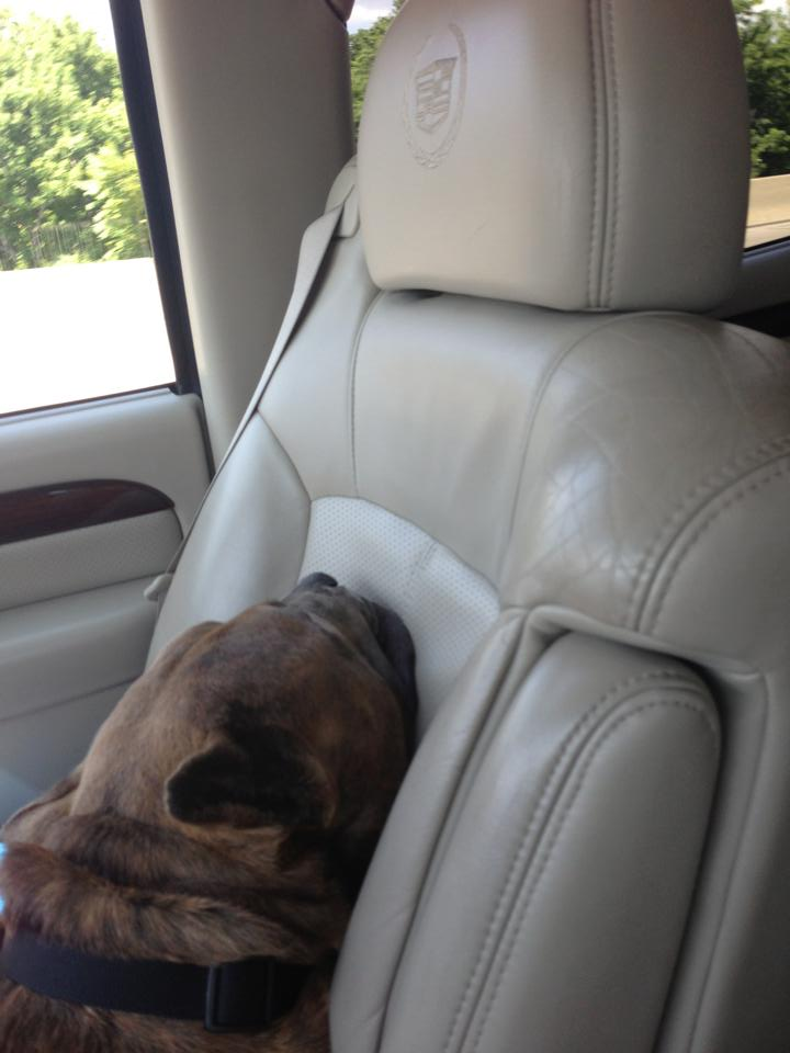 13 Pictures Showing Dog's Feeling after Being Rescued and On Their Way Home