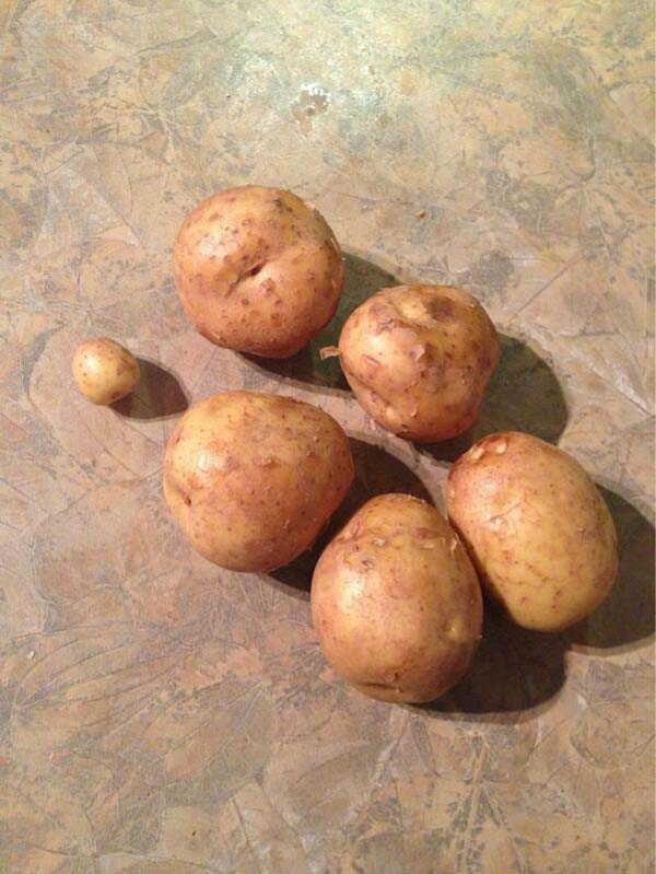 """2.""""So I asked my husband to buy 6 potatoes."""""""