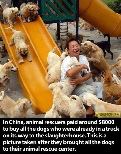 Animals Treated Like A Big Shot: That's The Way Showing a Great Nation!