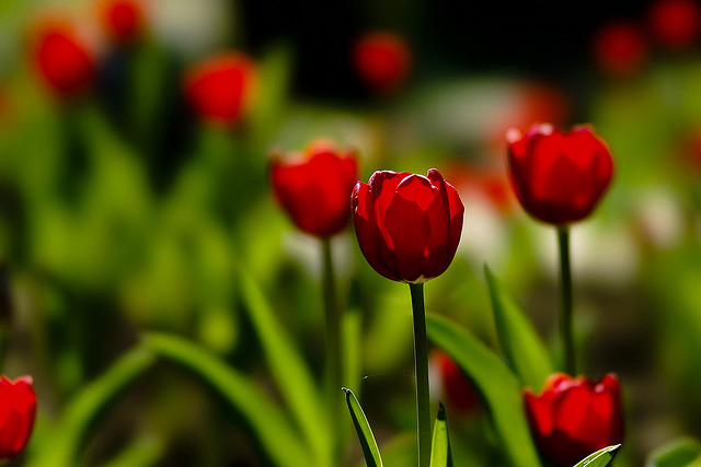beautiful flower images