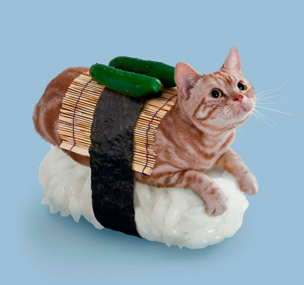 Sushi Cats: A Hilarious Bank of Weirdness