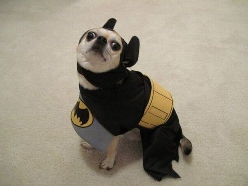 Dog who is the hero he thinks we deserve.