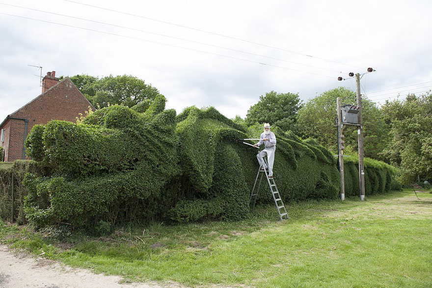An Old Gentleman Spent 10 Years Turning 150-ft-long Hedge Into Giant Dragon