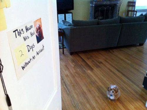 100 Hilarious Pictures That Will Absolutely Lighten Your Day