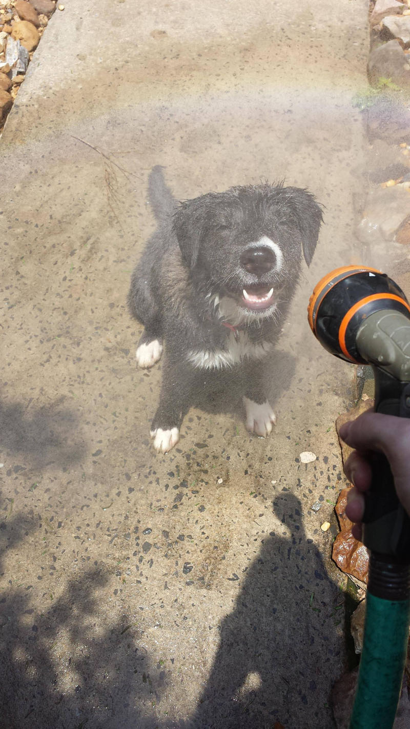 Lovely Pictures Of A Dog Enjoying Mist Setting On The Hose (1)