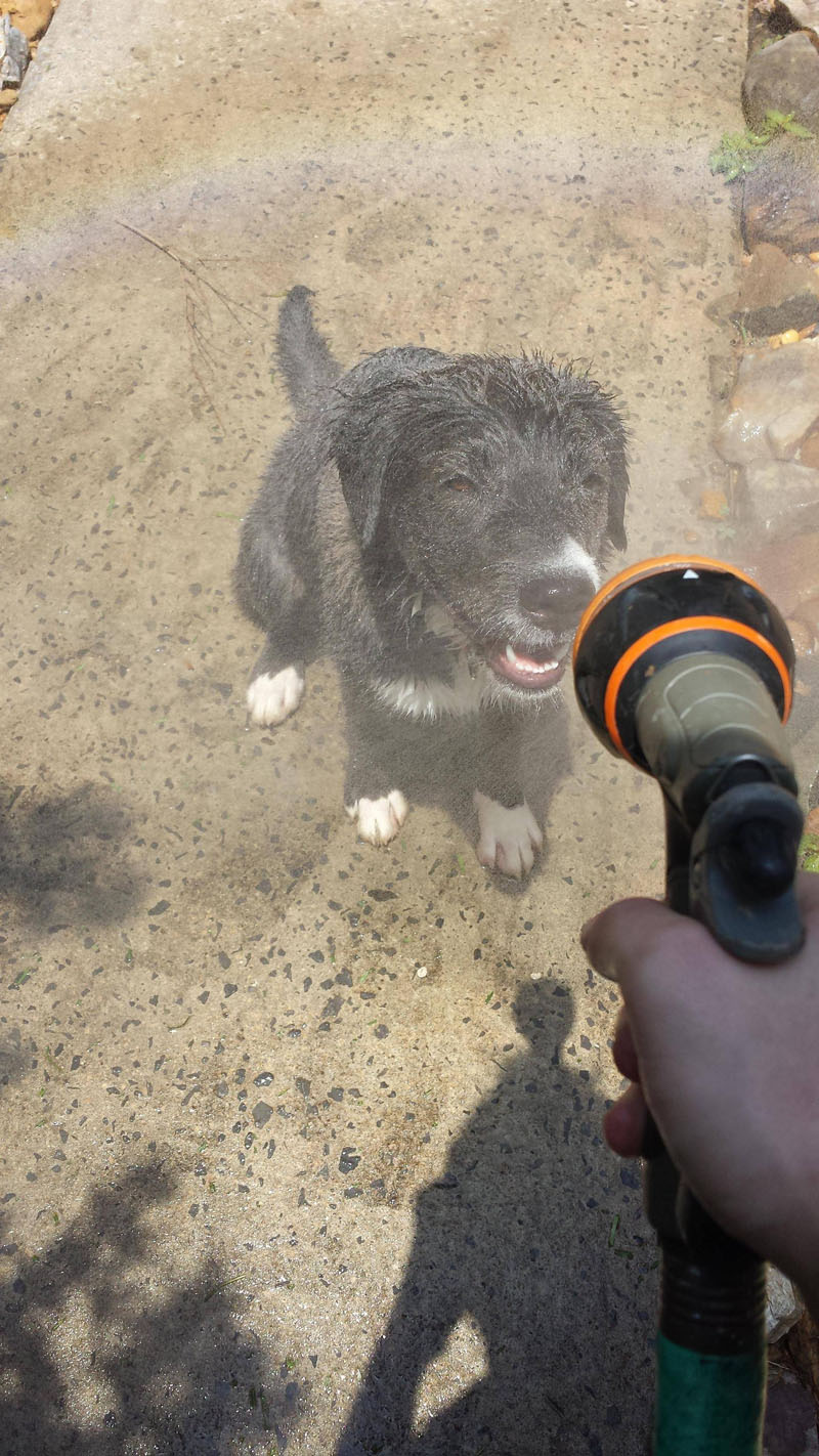 Lovely Pictures Of A Dog Enjoying Mist Setting On The Hose (2)