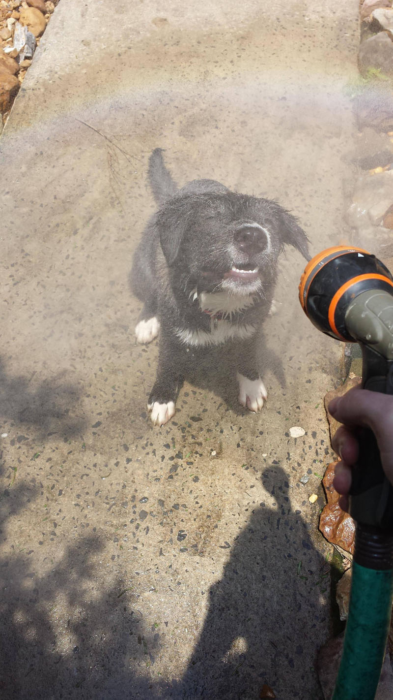 Lovely Pictures Of A Dog Enjoying Mist Setting On The Hose (3)
