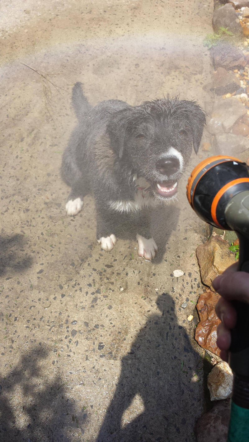 Lovely Pictures Of A Dog Enjoying Mist Setting On The Hose (4)