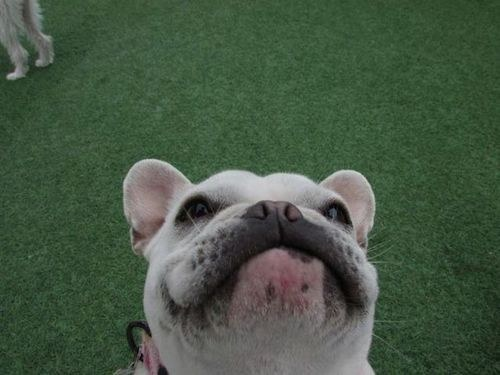 Dog who doesn't care what she looks like in the up-close selfie.