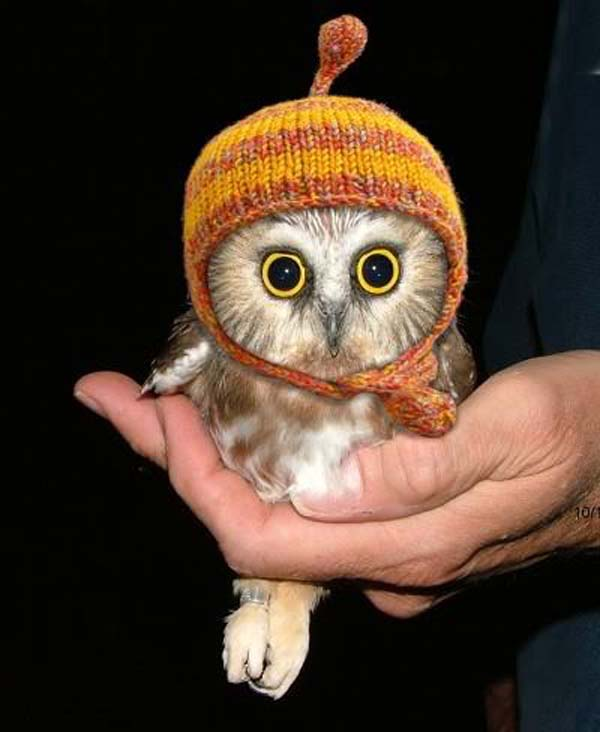 24. All owls should wear hats. That's a scientific fact.