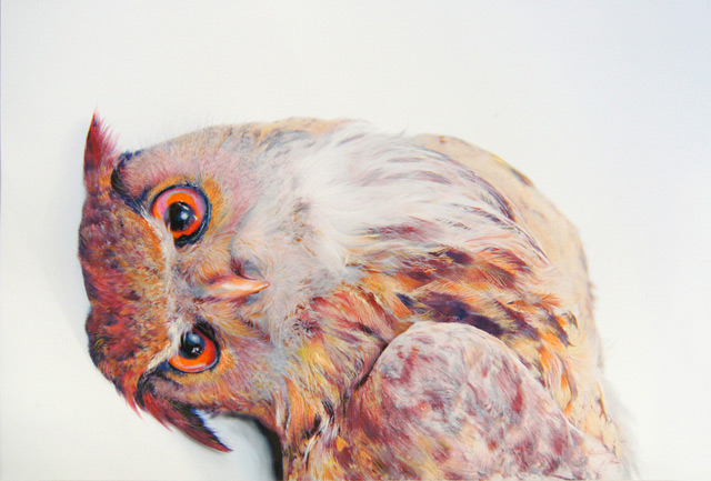 Amazing Owls Drawings by John Pusateri