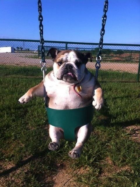 Dog who is absolutely ecstatic to be at the playground right now.