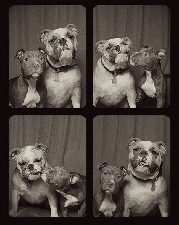 These Photos Will Tell You What Happened When Putting Dogs In A Photo Booth. It's More Than Fun I Dare Say!