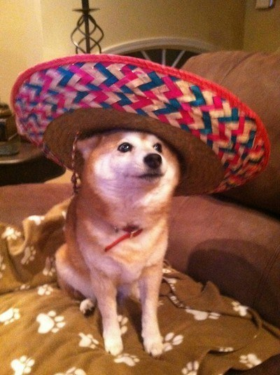 Dog with a very large sombrero.