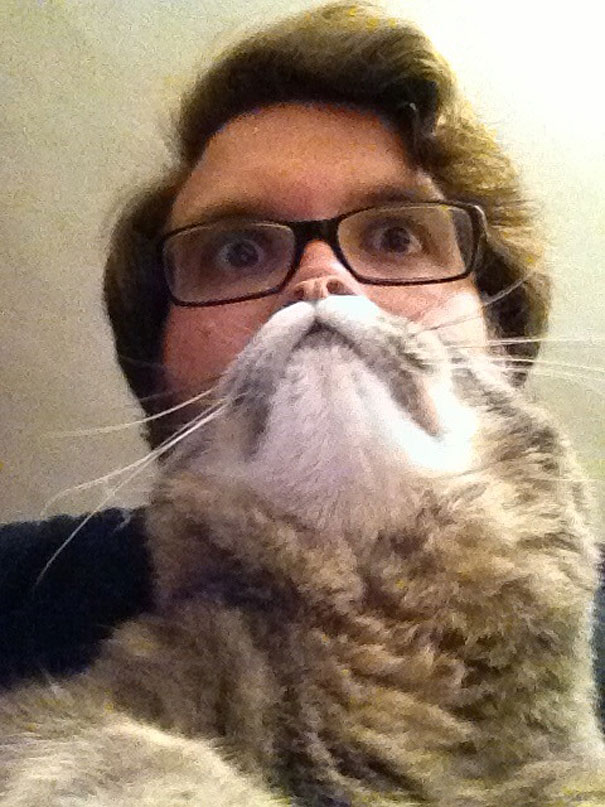 Cat Beards: A windstorm On the Internet