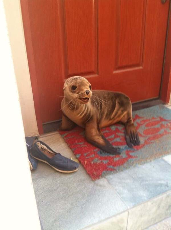 8. He has my seal of approval.