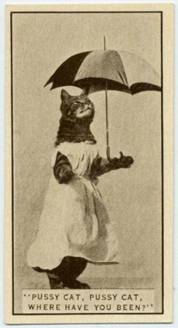 18. A cat posed for a cigarette card, found in Army Club Cigarettes (1932).