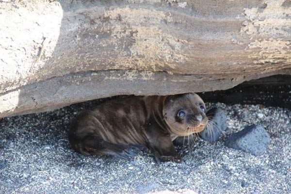 22. It's safe to come out now, little seal.