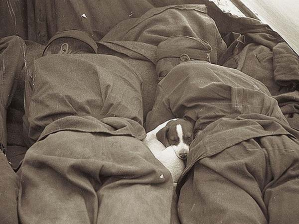 27. A small puppy sleeps in between Russian soldiers (1945).
