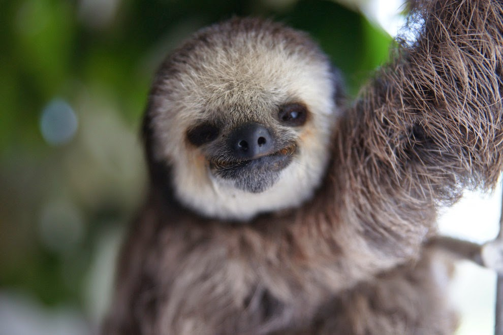 woman who lives with 200 sloth who lost their homes