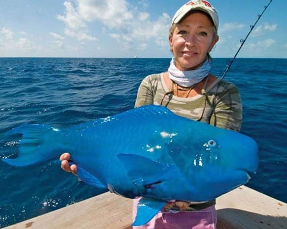 creepy and weird animals. The Blue Parrotfish