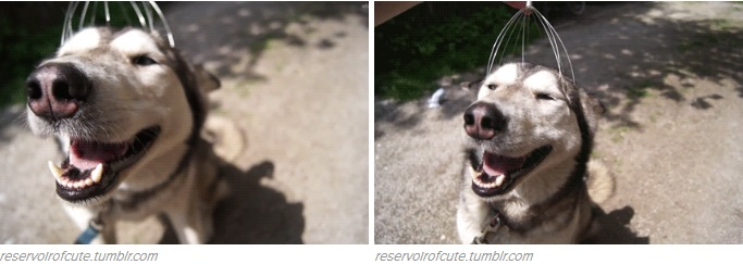 happiest-animal-faces