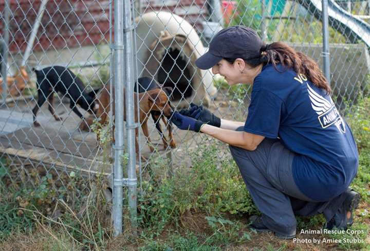 dogs-rescued-are-ready-to-get-adopted
