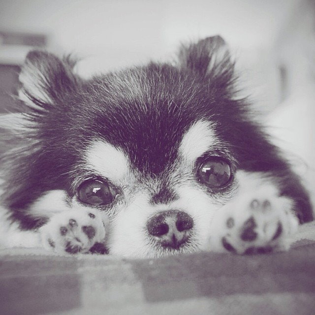 Dada The Dog: You Would Feel Happy Just By Looking At His Cute Little Face