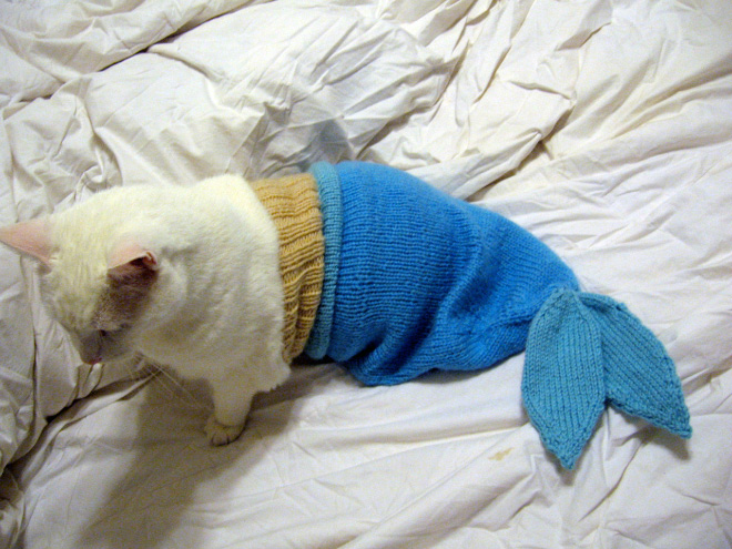 animals dressed as other animals mermaid