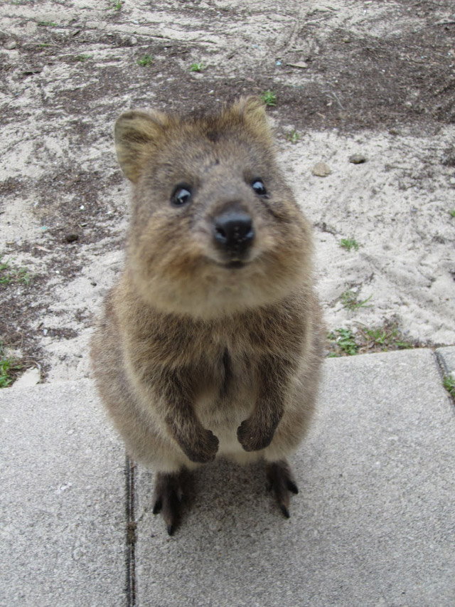 This Small Macropod Must Be The Happiest Animal On Earth