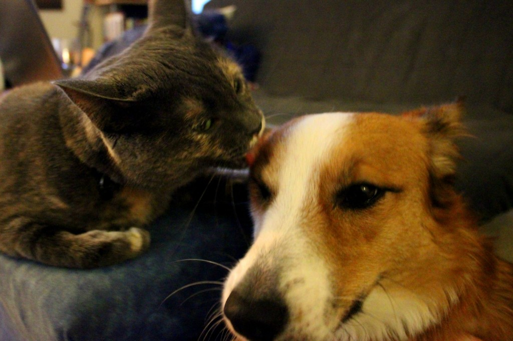 Who says that cats and dogs are enemies? Check out this cat-and-dog friendship. It will melt your heart away!