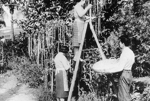 "14.) On April 1st, 1957, a BBC news program ended with a three minute segment about a spaghetti farm in Switzerland where spaghetti grew on trees. Many people fell for the hoax and contacted the BBC to ask how to grow their own. Their response: ""Place a sprig of spaghetti in a tin of tomato sauce and hope for the best."""