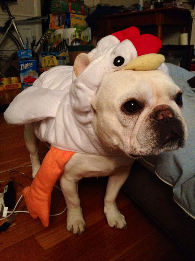 animals dressed as other animals
