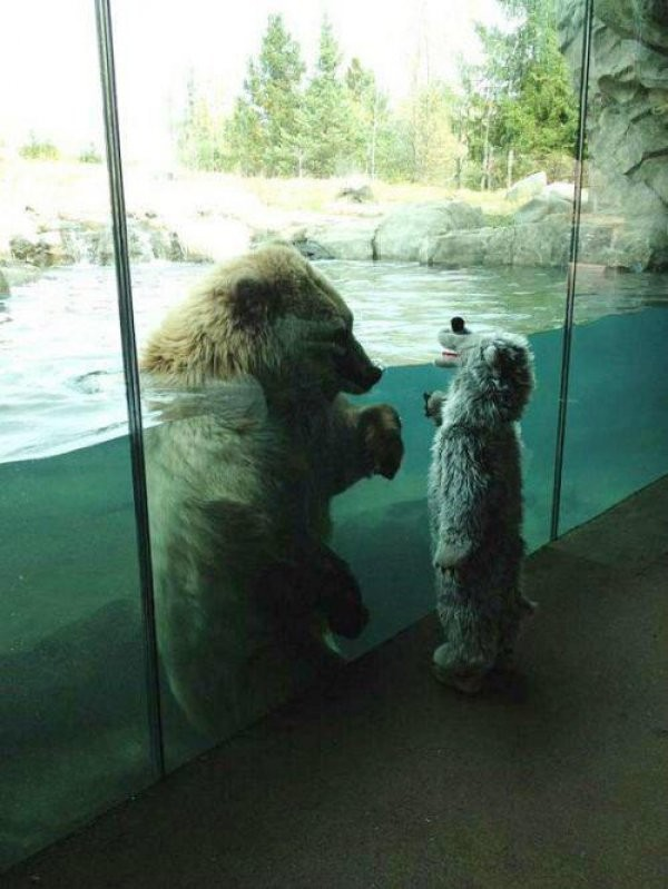 find-new-best-friends-at-zoo