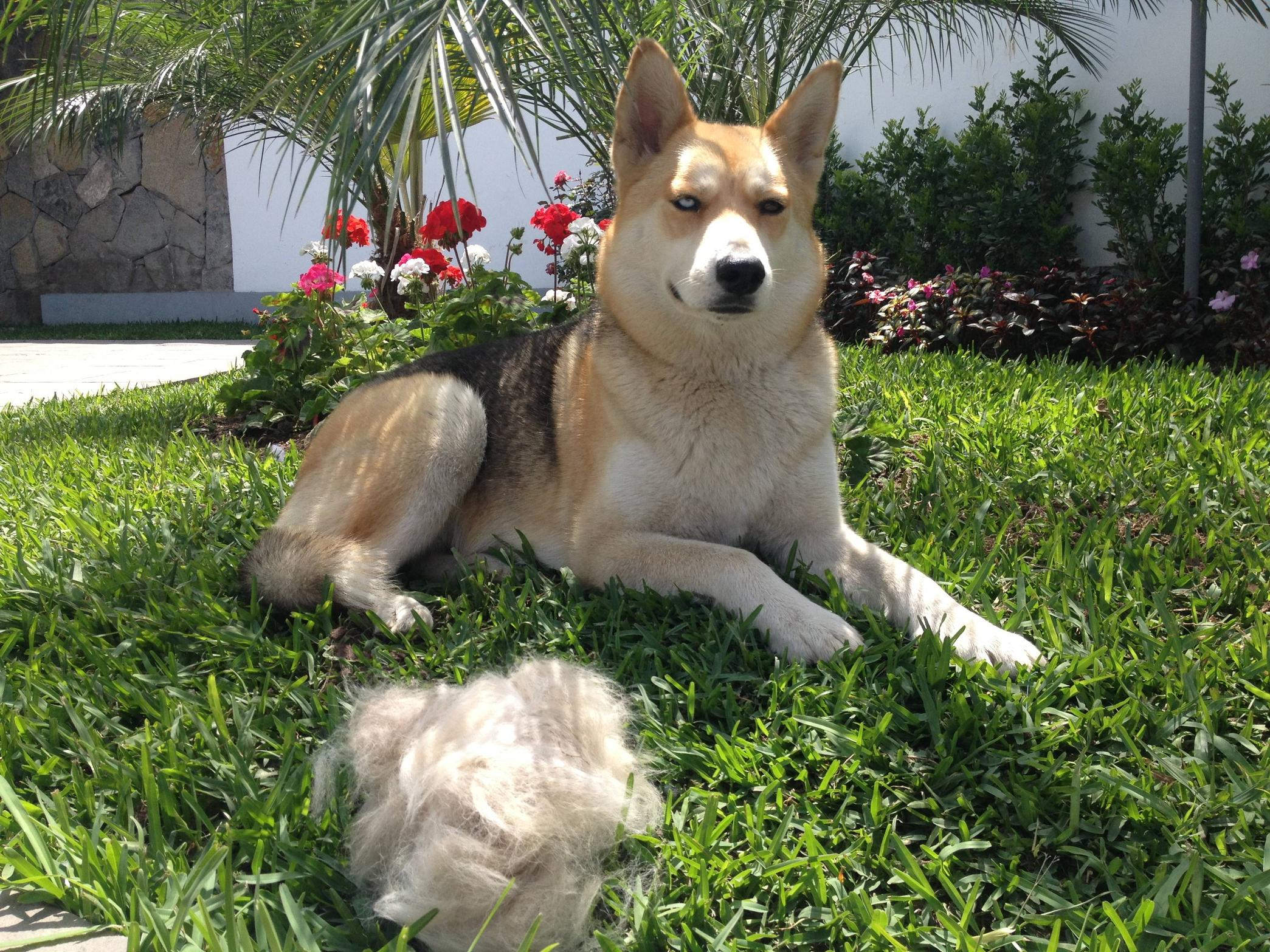 practical-ways-telling-you-how-to-do-with-your-pets-hair