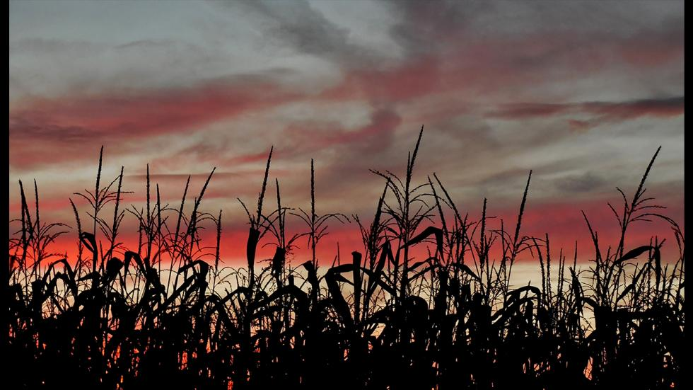 It's amazing out there awesome pictures Field of Corn