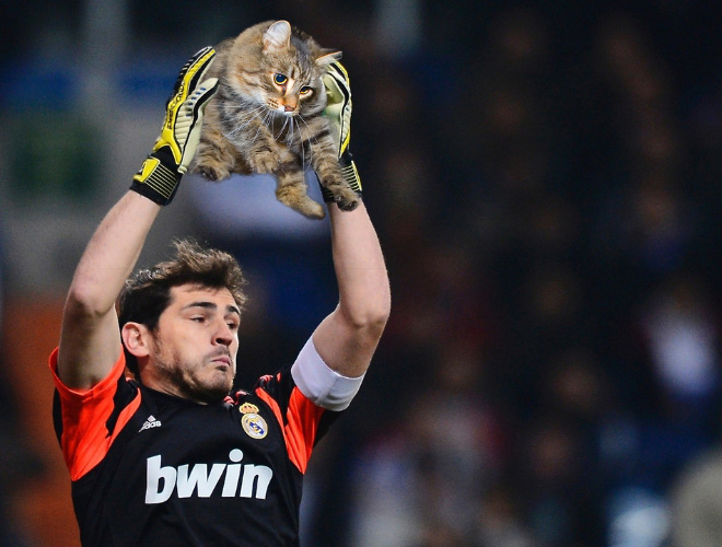 sports-equipment-replaced-with-cats