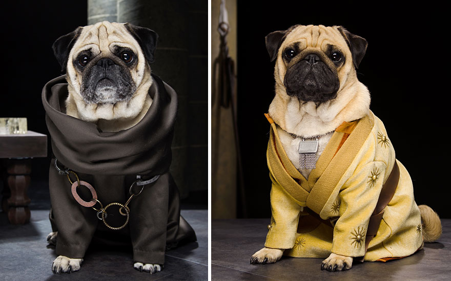 three-pugs-dress-up