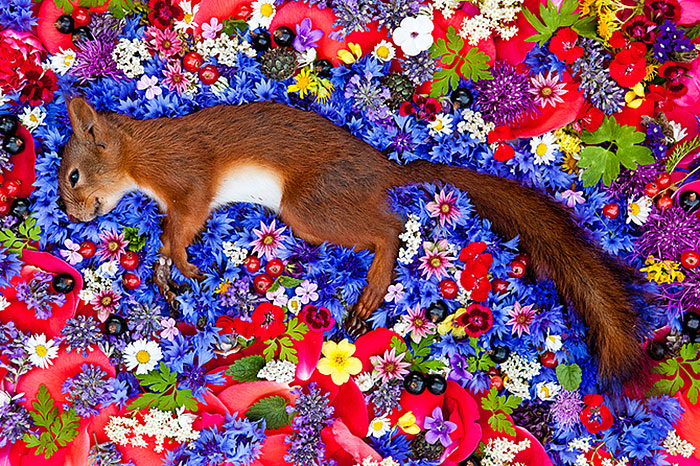 Unique Way To Memorialize Dead Animals: Artist Photographs Them Stunningly On Beds Of Flowers.