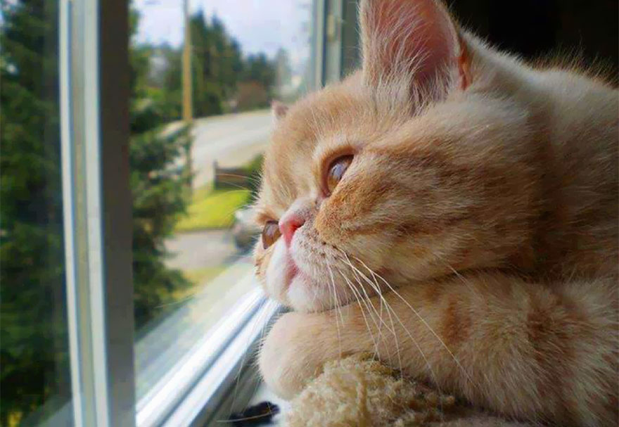 cats-waiting-for-their-owners