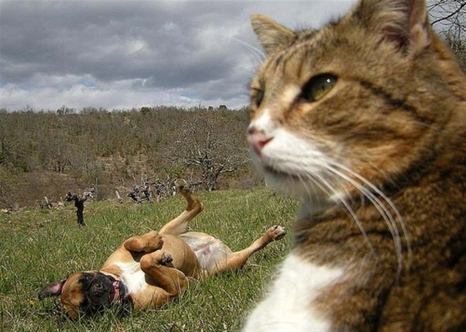 cats-taking-selfies
