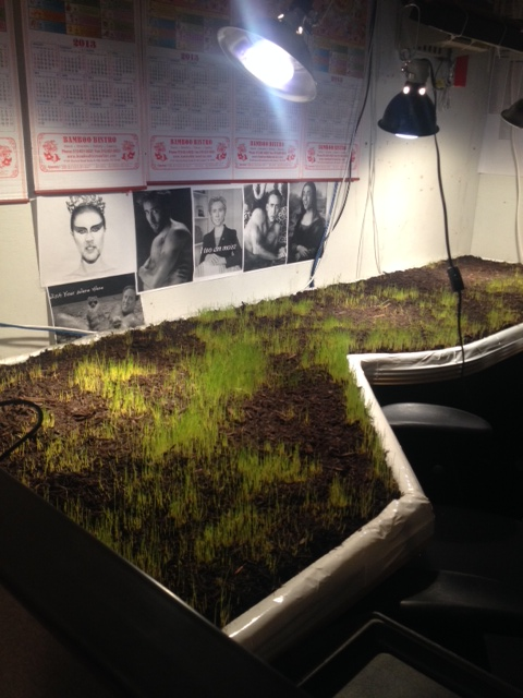 epic prank, this master grew a lawn on his coworker's desk