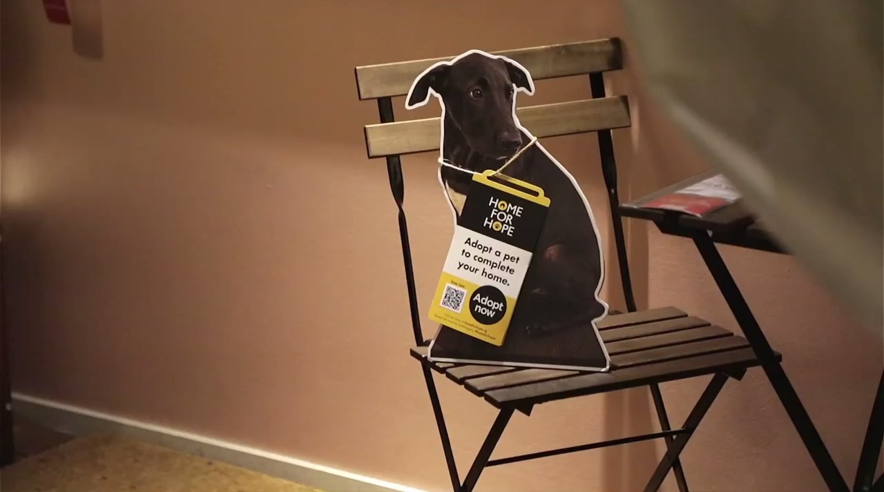 Ikea-has-helped-homeless-dogs-by-putting-featured-cardboard-cutouts-of-dogs
